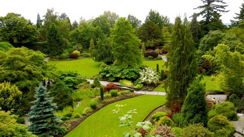 Ніж обприскувати сад влітку