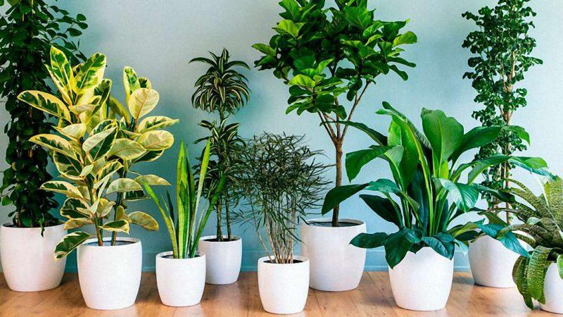 Як позбутися від мошок на кімнатних квітах: кошти від шкідників