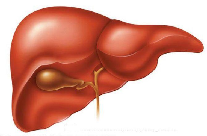 Запалення печінки: що таке, з-за чого відбувається, як запобігти