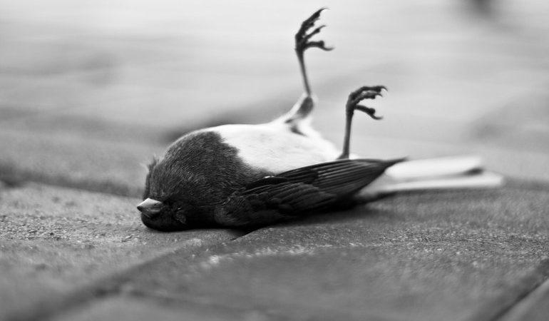 Пояснення по сонникам, до чого сниться мертва птиця: значення вмираючого пернатого на землі, у воді або будинку