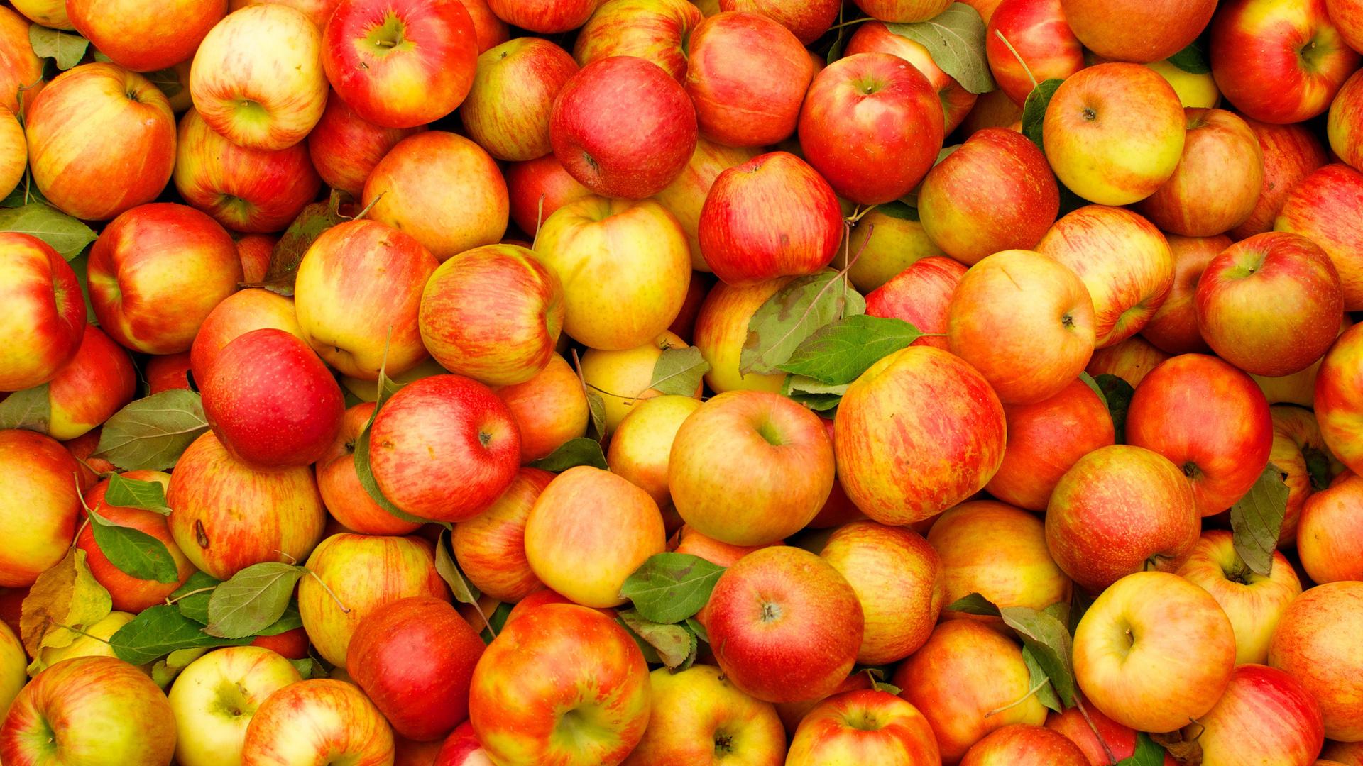 Из-за чего портятся яблоки при хранении