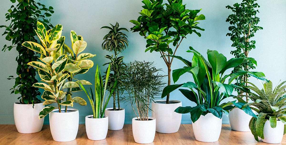 Как избавиться от мошек в комнатных цветах: средства от вредителей