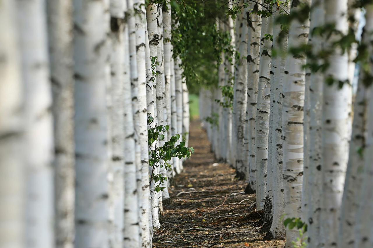 Механический и биологический способы борьбы с вредителями растений в саду