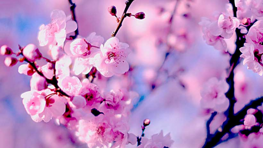 Уход за кожей весной: особенности весенего ухода за кожей, полезные советы