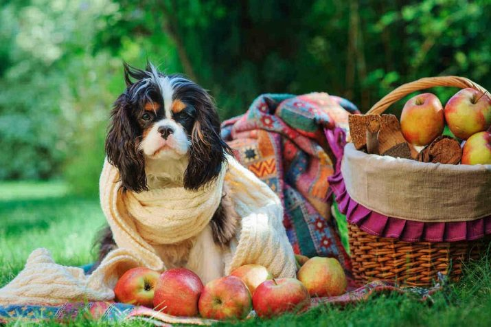 чи Можна давати собакам банани? 10 фото Користь і шкода фрукта для цуценят. В якому вигляді давати банани собаці, яка їх любить?