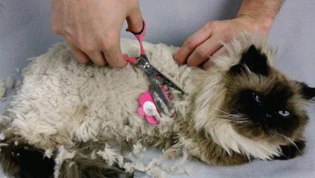 Ковтуни у кішок: причини появи. Що робити, якщо у кота звалюється шерсть? Вибір колтунореза. Як використовувати спрей та інші засоби?