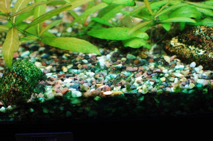 «Сайдекс» для акваріума (13 фото): інструкція із застосування, дозування «Сайдекса» проти водоростей
