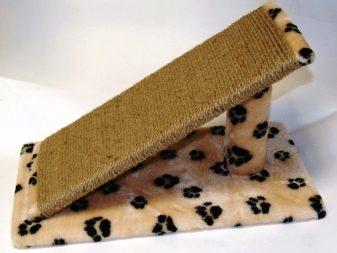 Шотландські лілові кошенята (21 фото): особливості забарвлення кішок. З яким кольором очей народжуються шотландські лілові кошенята?
