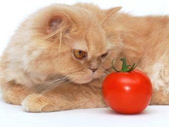 Як відучити кішку від корму? Способи перекладу кішки з сухого і мокрого корму на домашню їжу