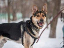 Як визначити породу собак? 24 фото Як впізнати за зовнішнім виглядом? Тести на визначення цуценя породи. Як зрозуміти, породиста собака чи ні?