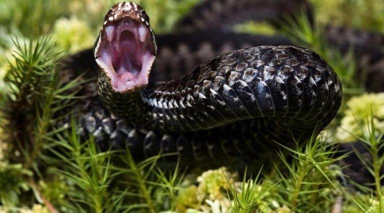 Приснилася чорна змія: чи варто жінці чекати неприємностей, значення величезною кобри і маленькою змійки