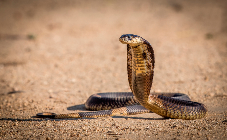 Сон, де сниться велика жовта змія: значення образу змії, напад, а також трактування сонників для жінок